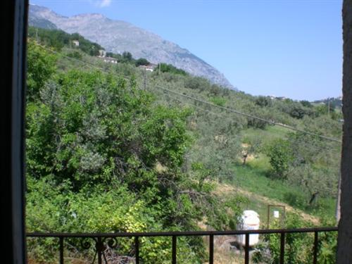 вид из спальни на оливковую рощу